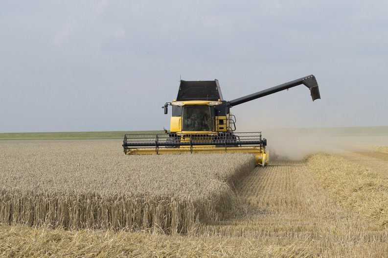 harvest-time-595447-1280