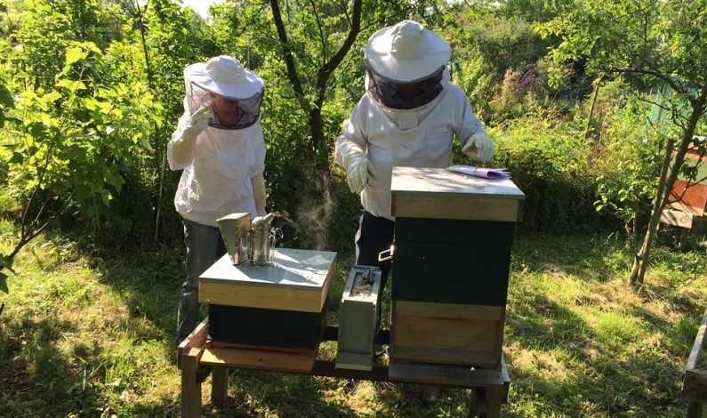 140418_finantari pentru apicultori_0