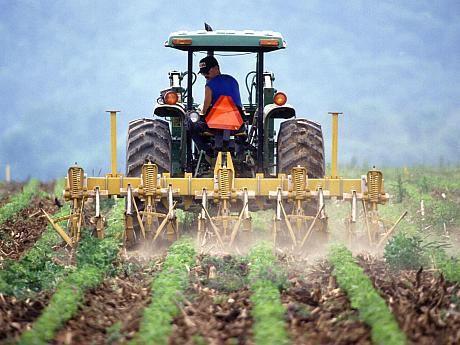 2180518_fermier-la-camp-605x