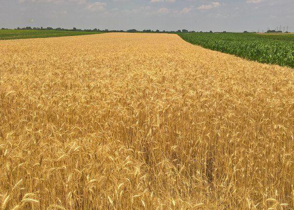 agricultura55grau-605x