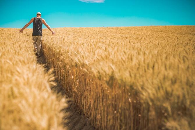 cereale_grau_agricultura_taran_19624100