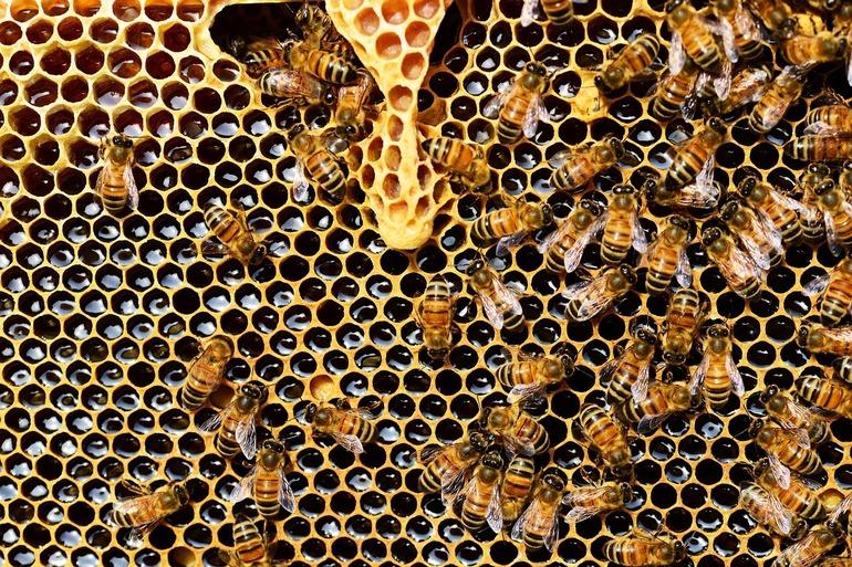 beehive-337695-1280