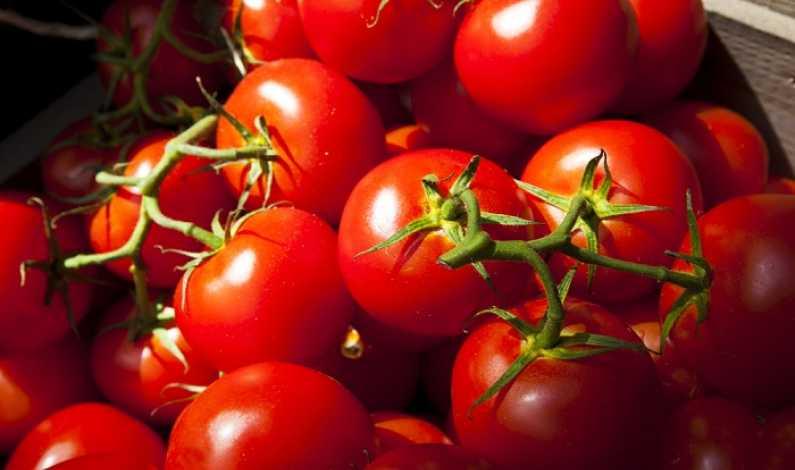 Tomate-Depositphotos