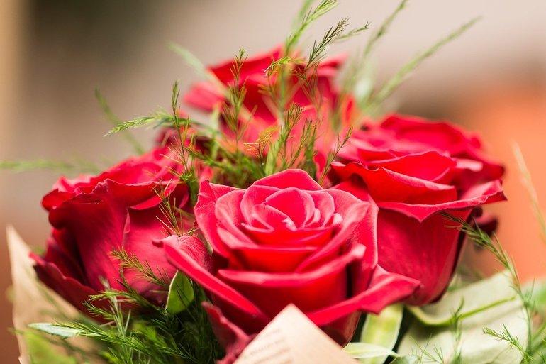 flower-3127810-1280